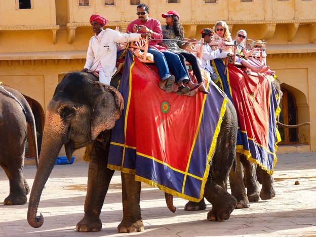 Indian elephants and their Mahouts, Amber Fort, India