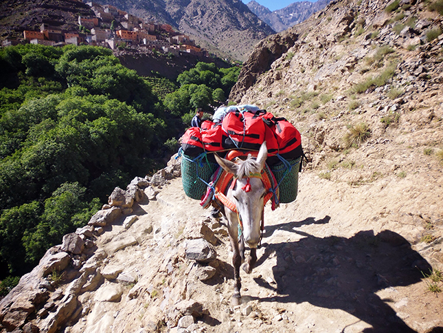 Our mule heavily laden following the narrow path up out of Imlil