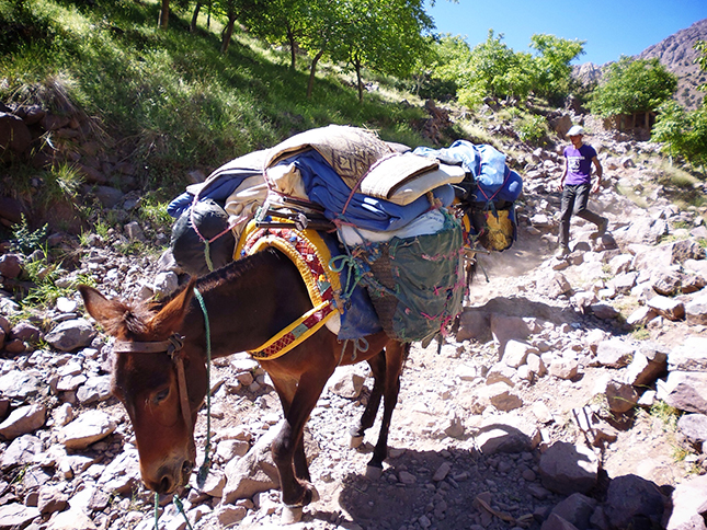 As we went up other porters and mules were coming down
