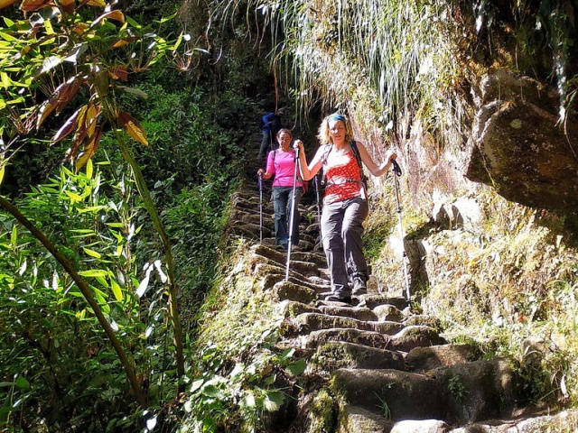 Jungle Steps